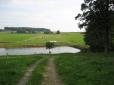 Auf dem Weg zur Weide